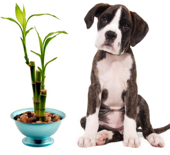 shipping-plants-pets-hawaii